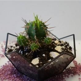 HEBITO Doniczka geometryczna, szklana, świecznik  - Kwiat 2